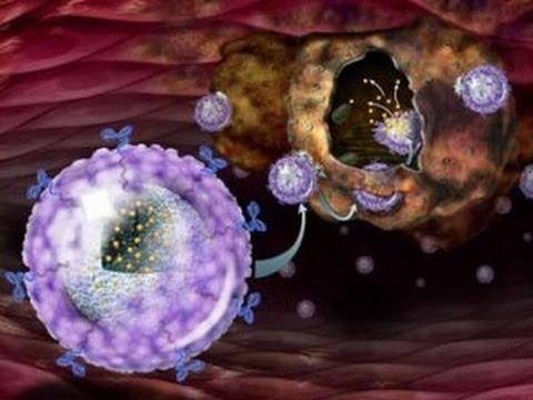 Ядро клетки. Урок биологии.