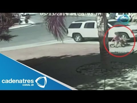 INCREÍBLE Gato salva a un niño al ser atacado por un perro