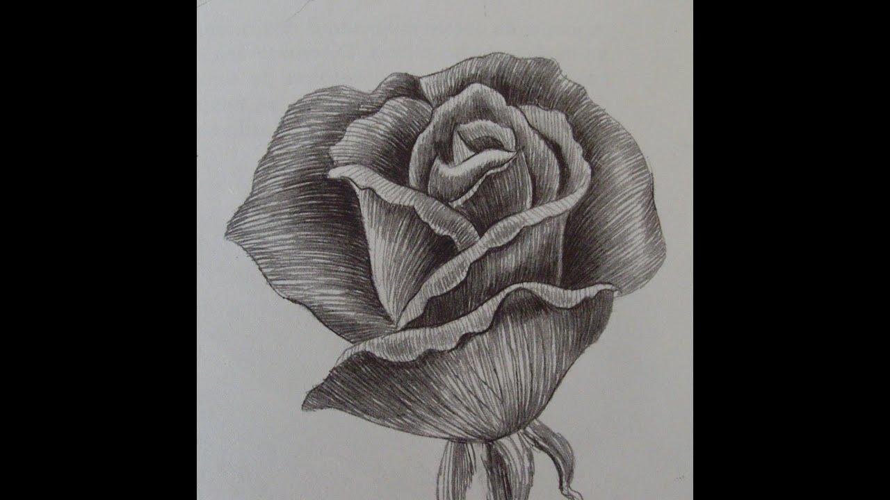 Come disegnare una rosa passo a passo youtube for Immagini da disegnare a matita facili