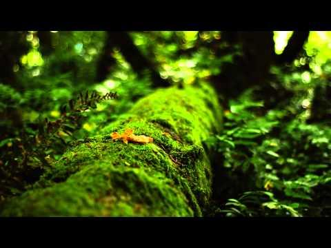 Third Eye + Heart Healing Music & Isochronic Tones ~ 852hz Returning To Spiritual Order video