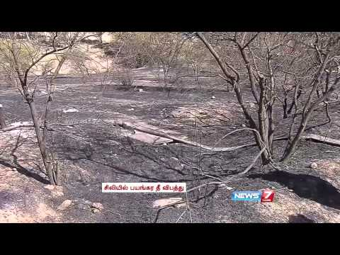 12 dead in Chile Forest Fire