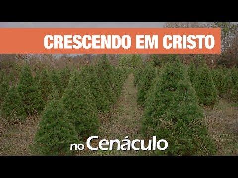 Crescendo em Cristo | no Cenáculo 22/11/2019