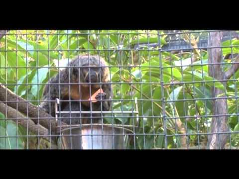 Free Day at the Santa Ana Zoo