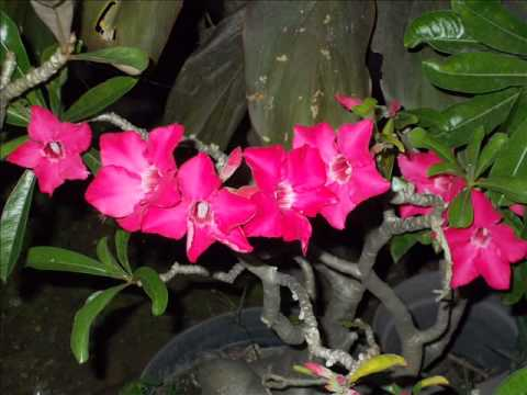 Collection of beautiful tropical flowers -  beautiful tropical garden