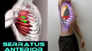 SERRATUS ANTERIOR - 6 Functional Exercises