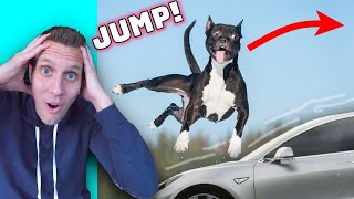 Rating Unbelievable Dog Tricks (Reacting to viral Tik Tok animal videos)