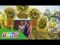 Cổng cưới lá dừa - chỉ miền Tây mới có | THDT thumbnail