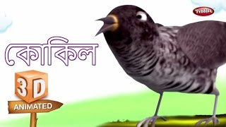 Koyal Rhyme in Bengali | বাংলা গান | Cuckoo Bengali Rhyme For Kids | 3D Bird Songs Bengali | Poems