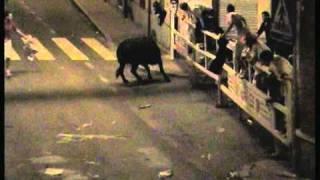 Toro destroza el doble vallado y escapa en el 42 Encierro nocturno Nava de la Asunción