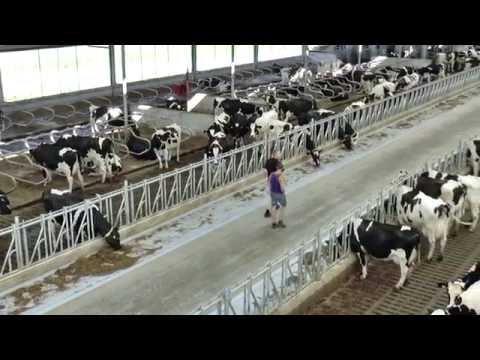 Nieuwe ligboxenstal voor melkveebedrijf De Genders in Giesbeek - www.melkvee.nl