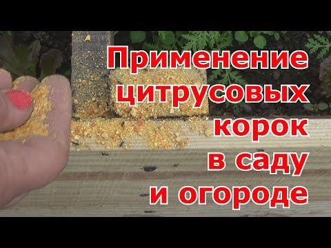Народные средства от вредителей – кока-кола, мандариновые и апельсиновые корки и валерьянка