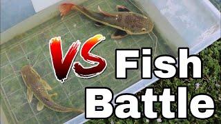 Mega fish battle..