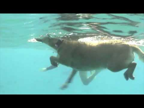 dog-paddling-with-dolphins.html