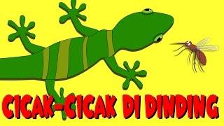 Cicak - Cicak Di Dinding  | Kumpulan 17 minutes | Lizard on the Wall