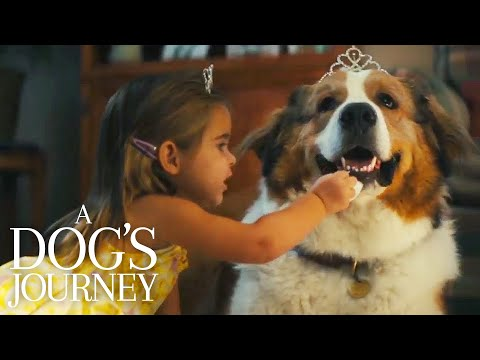 A Dog's Journey | Hannah & Bailey's Party | Film Clip | Own It Now On Digital, 8/20 On Blu-ray & DVD