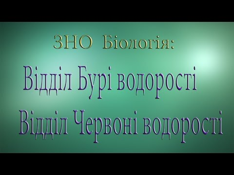 ЗНО Біологія  Відділ Бурі  водорості  Відділ Червоні водорості