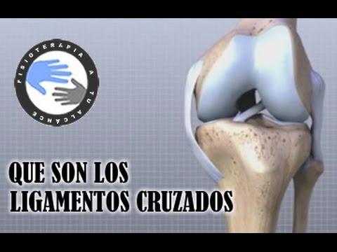 Ligamento cruzado anterior y posterior, que son y como se lesionan  /  Fisioterapia a tu alcance