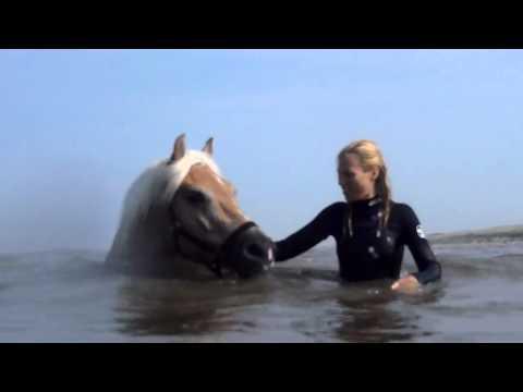 Haflinger Angelo zwemmen in zee