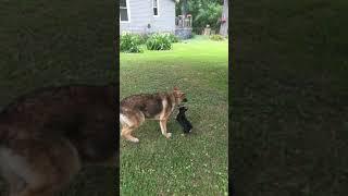 Old dog vs puppy dog