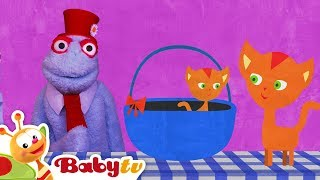 Dog and Cat in a Funny Animals Video   BabyTV