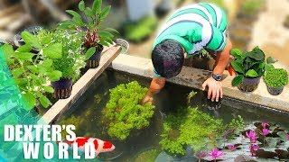 A TOUR TO THE PLANTATION OF AQUATIC PLANTS!