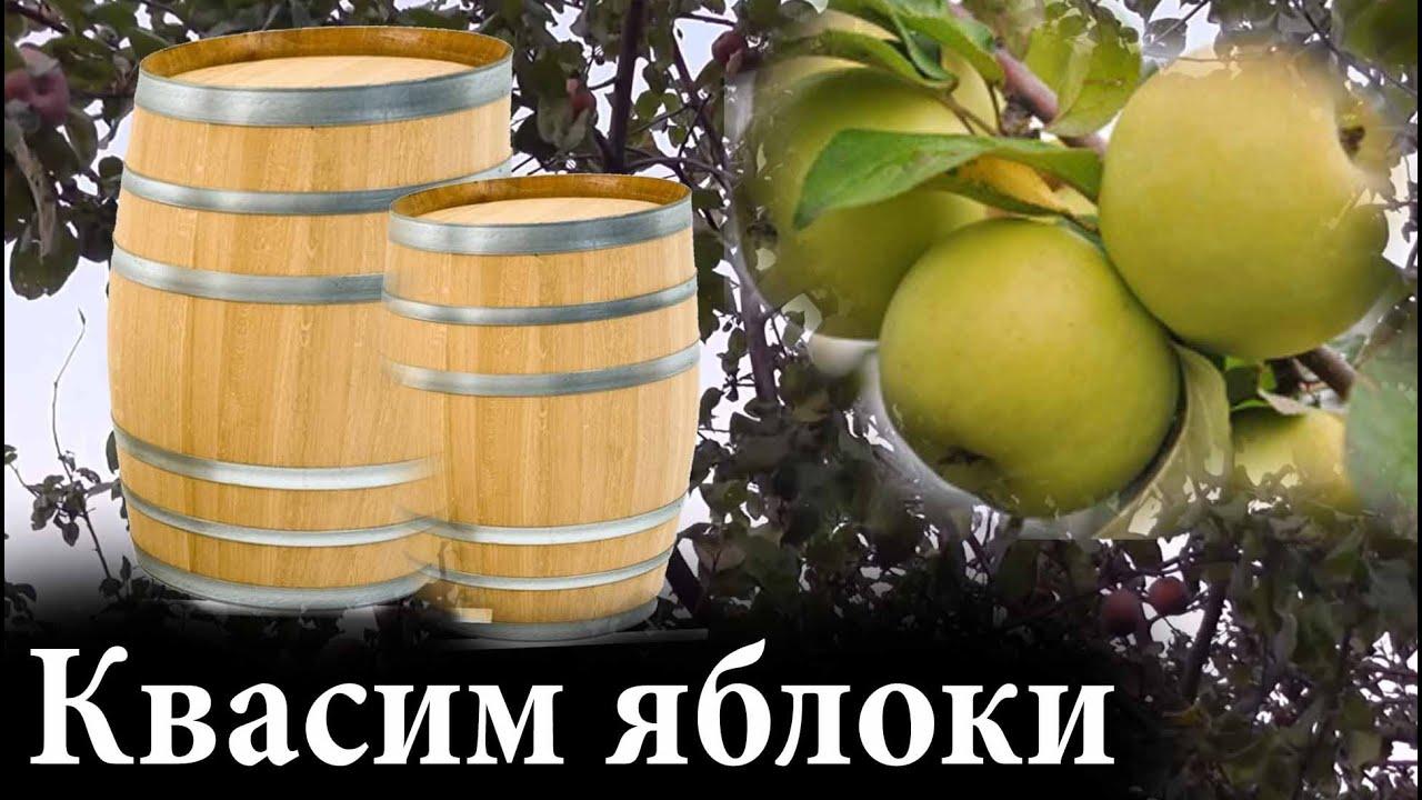 Как заквасить яблоки в домашних условиях