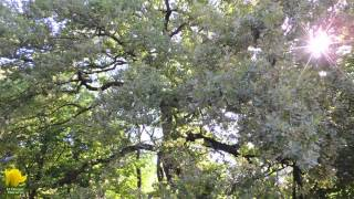 Arboles campo del moro