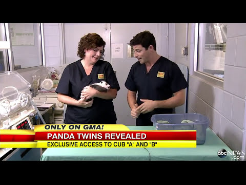 Panda Twins Born: First Look Inside the Nursery