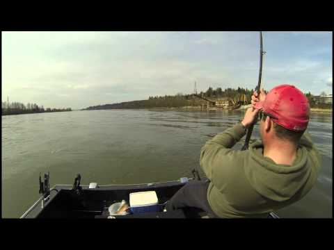 Fraser river spring sturgeon fishing