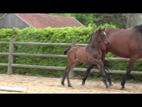 change_video_youtube2('FCdUbRRikBs','Casallo Z x Annatou Z');