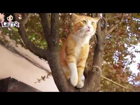 【勞拉】你真的了解貓嗎?幾分鍾速看《伊斯坦布爾的貓》