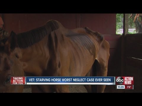 Woman faces neglect charge after detective locates starving thoroughbred horse in front yard