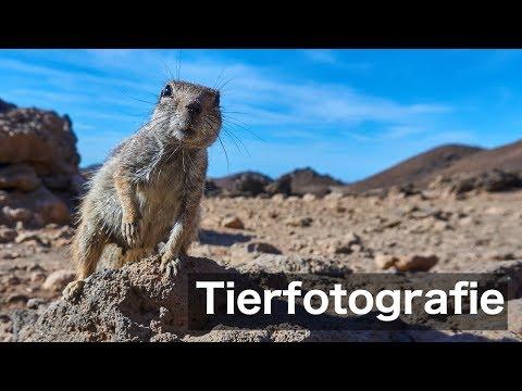 Tiere fotografieren | Fotografie Tipps & Tricks