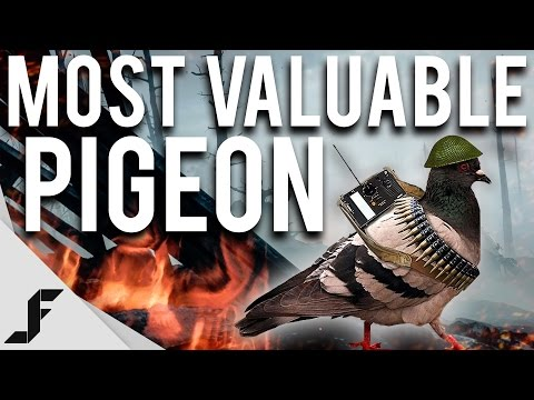 MOST VALUABLE PIGEON - Battlefield 1