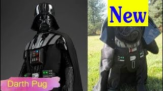 Cute Pets Dressed Up As Star Wars Characters HD