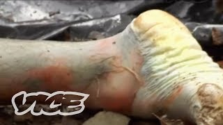Dr. Jerry Payne: On the Decomposing Pig. Уроки вязания на ... Human Decomposition Time Lapse