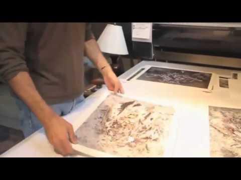 The Great Pacific Garbage Patch - La plastica che sta uccidendo gli Albatros (Sub Ita)