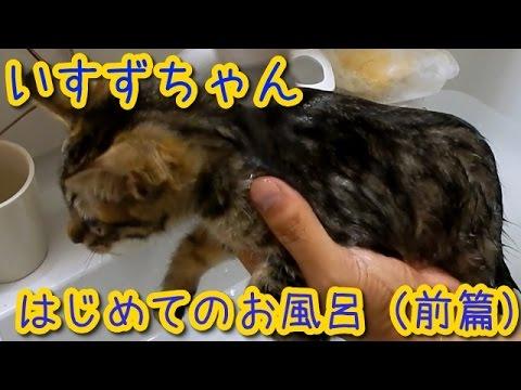 猫【かわいい子猫】いすずちゃん初めてのお風呂前編