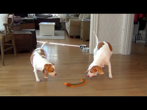 Dog And Sister Team Up To Destroy Giant Centipede video