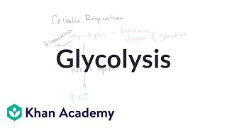 Overview of glycolysis | Cellular respiration | Biology | Khan Academy