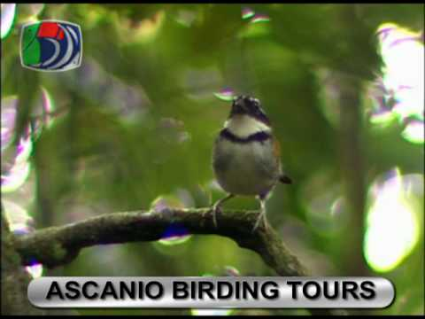 Ascanio Birding Tours presentation