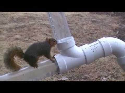 Squirrel Video #4 Obstacle Course Kansas Wakeboard Chick