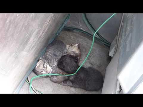 黒に子猫たち、ぴったりくっついてお昼寝 kitten