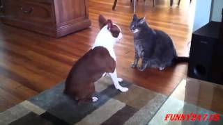 Funny Animals ★ Dogs Annoying Cats Compilation 2015