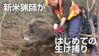 新米猟師がはじめてのイノシシ生け捕りに挑戦する【グロなし】New rice hunters challenge their first wild boar capture