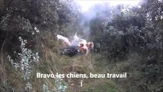Battue aux sangliers 2014/2015 à Orsan Gard 30  n°1