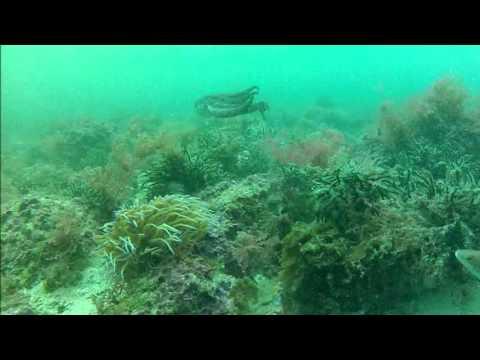 Mergulho Baia da Armacao (Sesimbra) - 13-Abr-2013