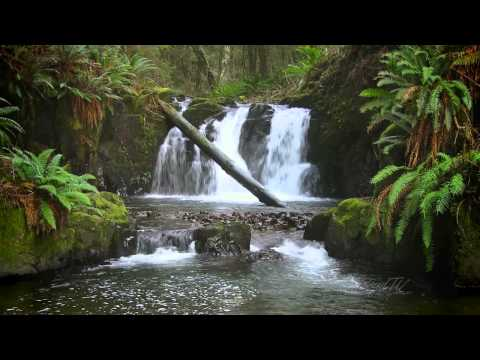 The Forest Waterfall Hd - The Calming Sound Of Water video