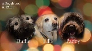 [Dogglebox IPA Effectiveness Christmas Special 2014] Video