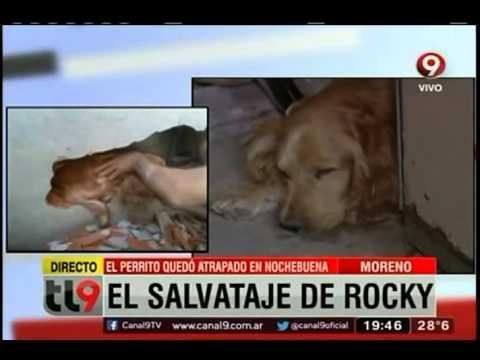 El salvataje del perro atrapado
